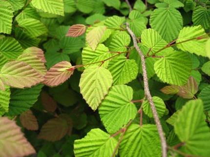 玉川上水緑道のかわいい植物